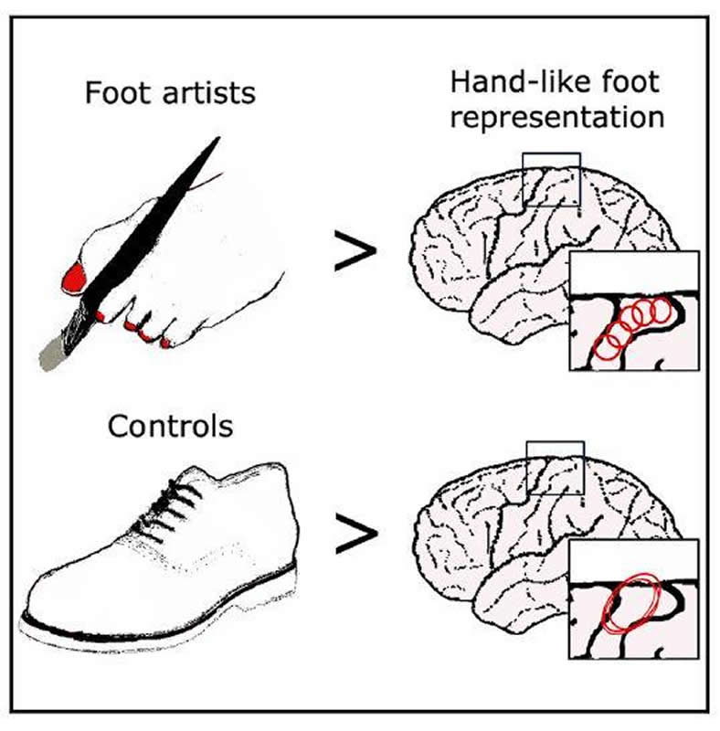This shows the toe map in the brain