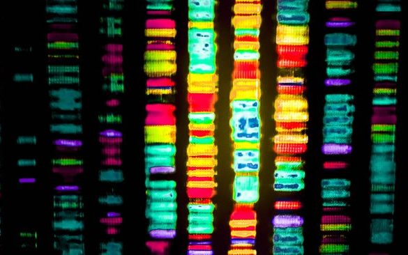 This shows genomic sequencing