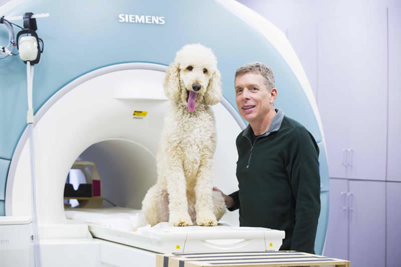 This shows the researcher and a dog next to an fMRI machine