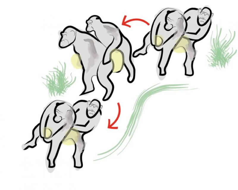 This is a drawing of the chimp conga