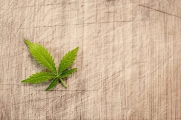 This shows a cannabis leaf on a cookng board