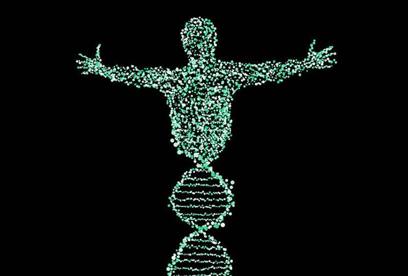 This shows a dna strand made into the shape of a human body