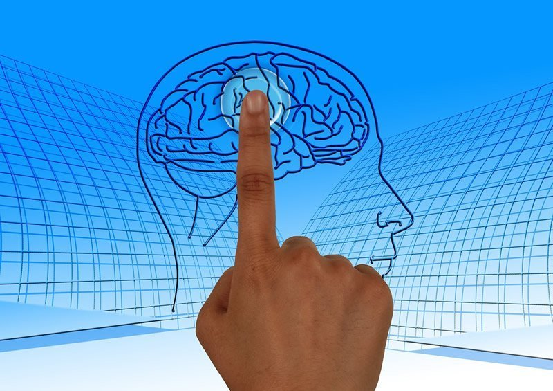 This shows a finger pointing to a picture of a brain