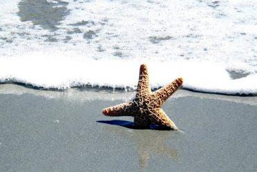 This shows a sea star on a beach