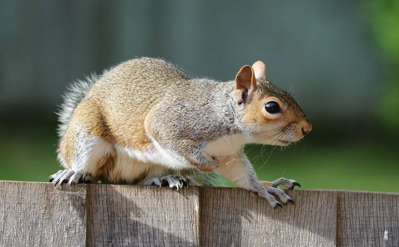 This shows a squirrel