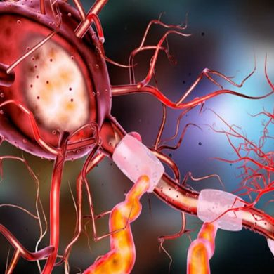 This is a diagram of a neuron