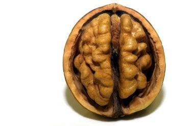 This walnut looks like a brain