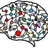This shows a brain made up of networks