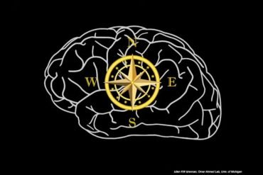 This shows a brain with compass points