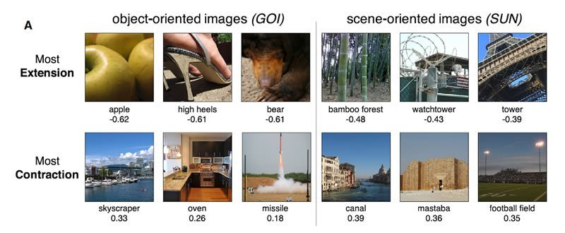 This shows images from the study