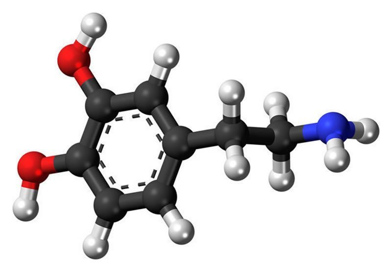 This shows the chemical structure of dopamine