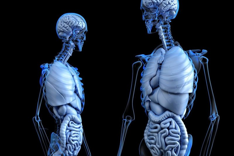 This shows the anatomy of two bodies