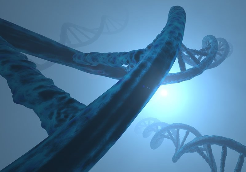 This shows dna