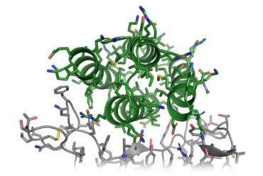 This shows a protein structure