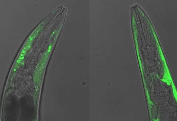 This shows nematodes