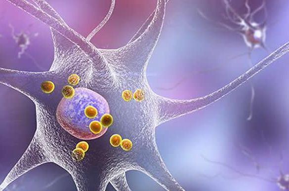 This shows a neuron and t cell