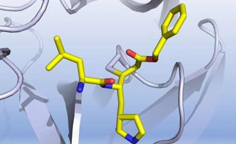 This shows the enzyme