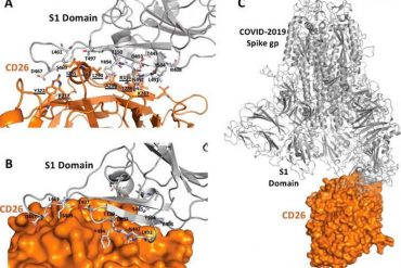 This shows the interaction between dpp4 and covid19