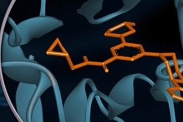 This shows the chemical structure of anandamine