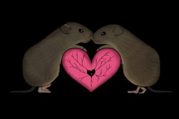 This is a drawing of two voles hugging over a heart