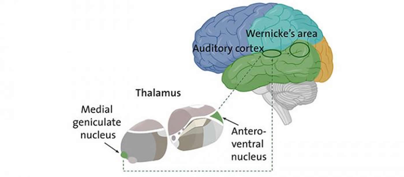 This is a diagram of the thalamus