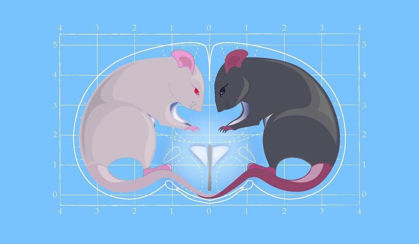 This is a drawing of two mice