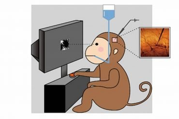 This shows a monkey at a computer screen