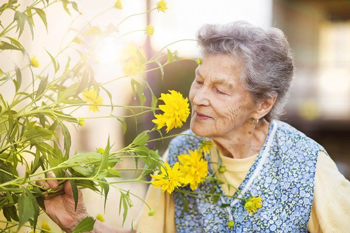 This shows an old lady smelling a rose