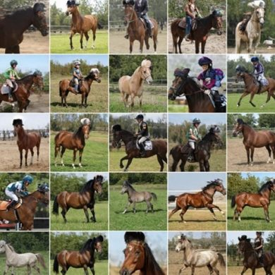 This shows generated images of horses in hats