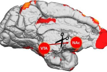 This shows the location of the VTA and NAc in the brain
