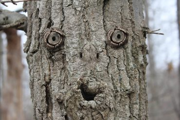 This shows a face on a tree
