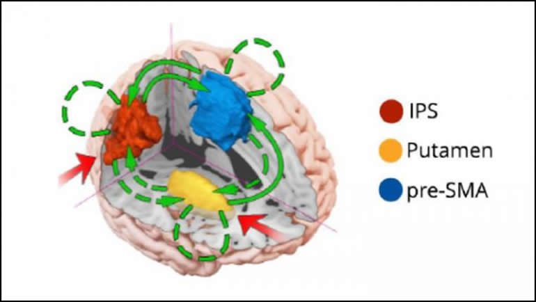This is a diagram of the multitasking network in the brain