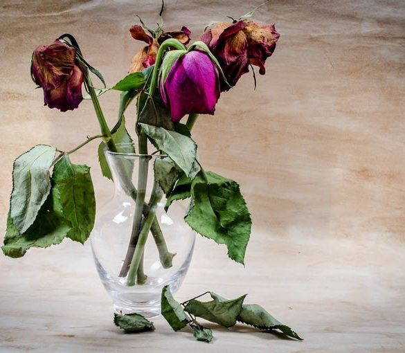 This shows wilting flowers