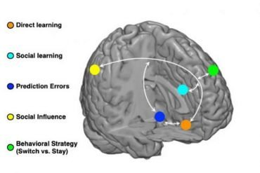 This shows a loop diagram of the learning types in the brain