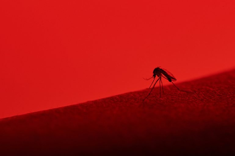 This shows a mosquito