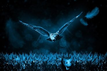 This shows a mouse fleeing from an owl