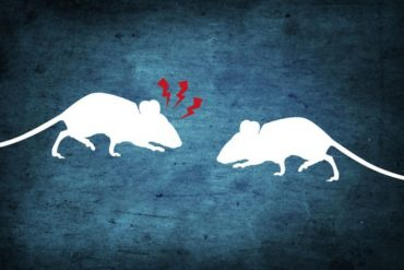 This shows a cartoon of two mice