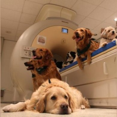 This shows dogs in an fMRI