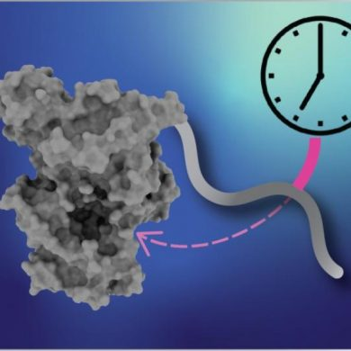 This shows dna and a clock