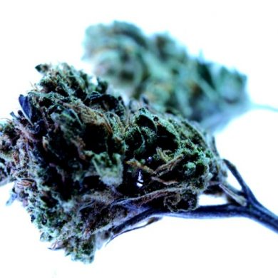 This shows a cannabis bud