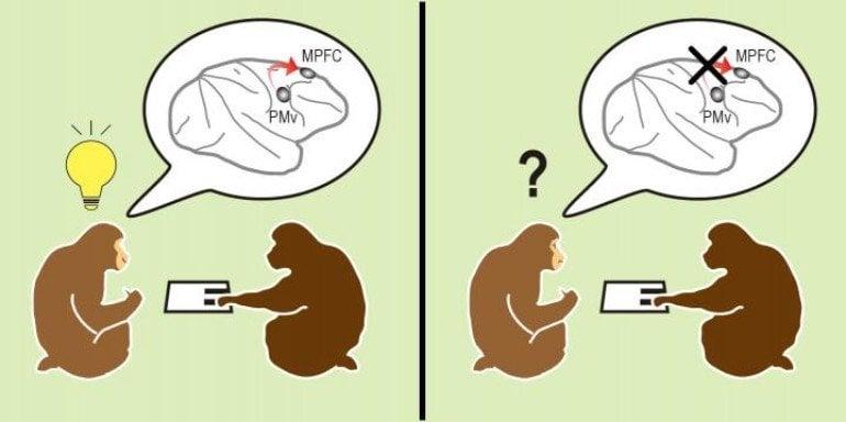 This diagram shows social acting monkeys