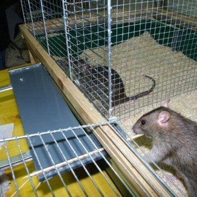 This shows rats