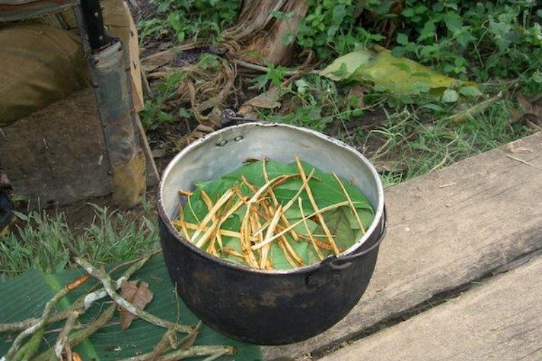 This shows ayahuasca tea