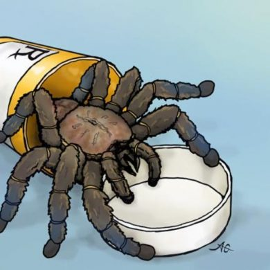 This shows a cartoon of a tarantula