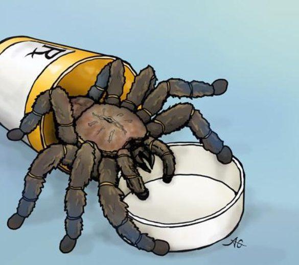 This shows a cartoon of a tarantula