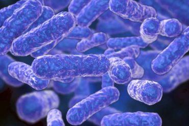 This shows the bartonella bacteria
