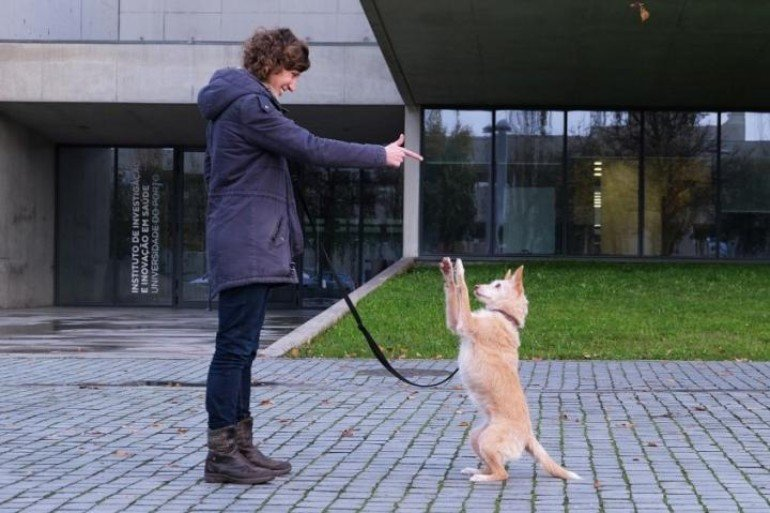 This shows the researcher training a dog