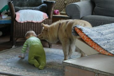 This shows a dog and a baby
