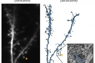 This shows a neuron and a synapse