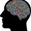This shows a black outline of a head and a colorful brain